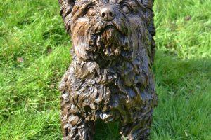 Garden Yorkshire Terrier