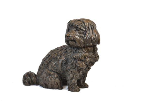 Maltese Terrier front quarter left view