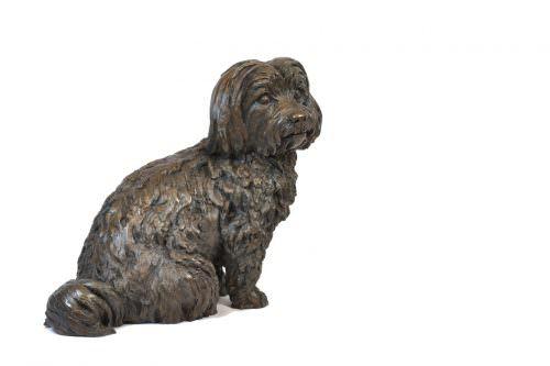Maltese Terrier front quarter right view