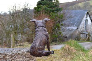 bronze Border Collie garden statue