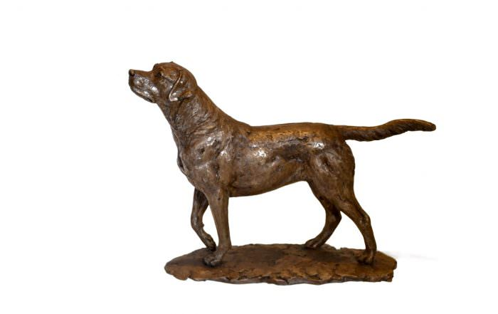 Small Standing Labrador - left side view