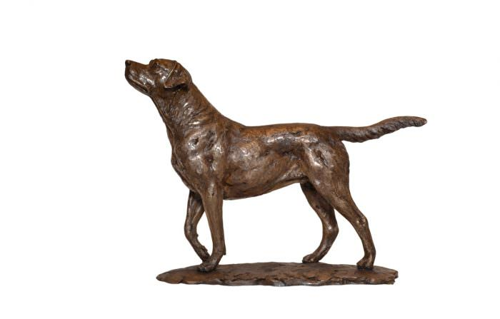 Small Standing Labrador left side view