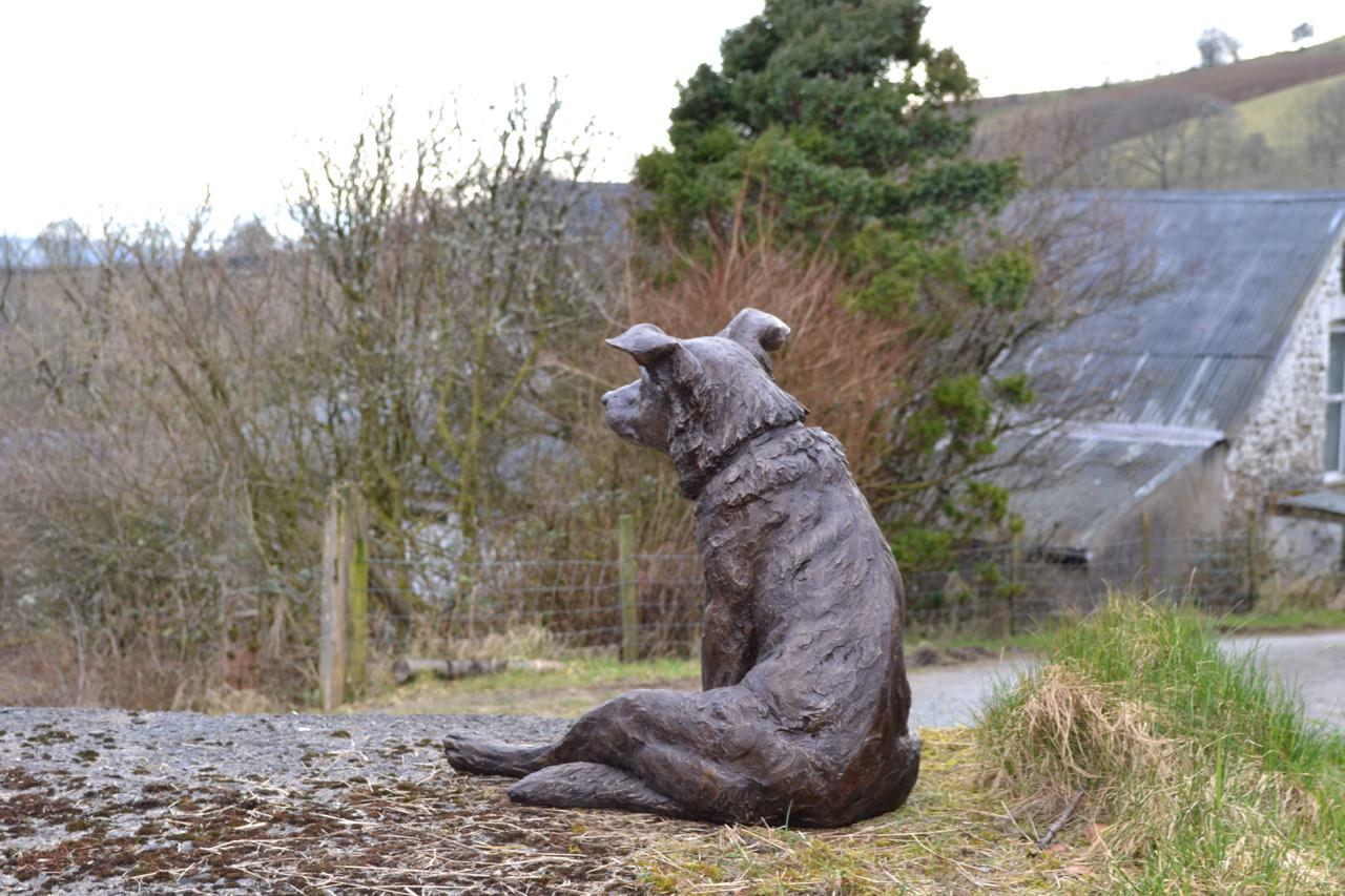 Bronze Sitting Border Collie Sculpture