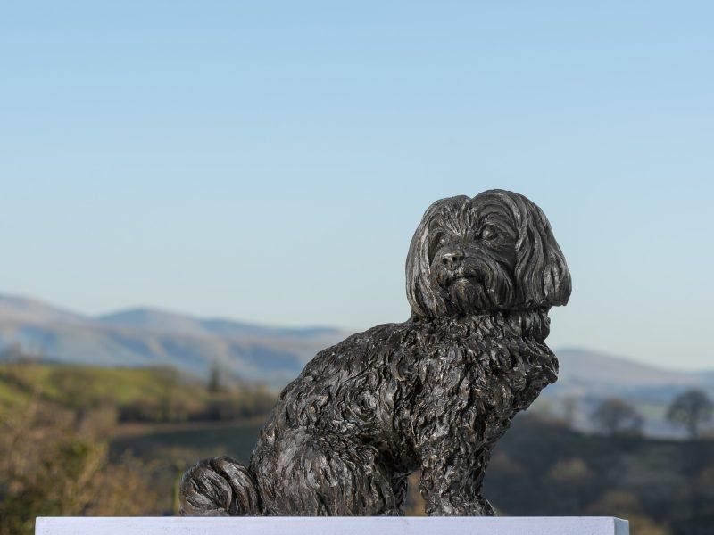 sitting maltese terrier