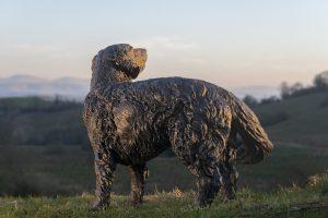 bronze retriever sculpture