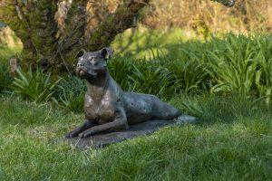 Lying Staffordshire Bull Terrier