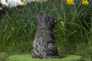 West Highland Terrier Back
