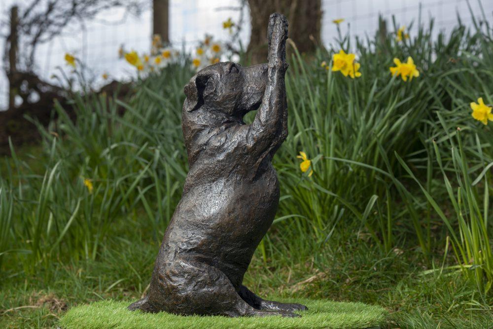 Staffordshire Bull Terrier Waving Paws