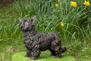 Yorkshire Terrier Bronze Statue