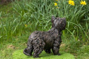 Back of Yorkshire Terrier