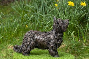 Side Yorkshire Terrier