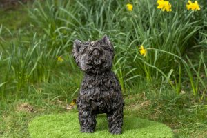 Front Yorkshire Terrier