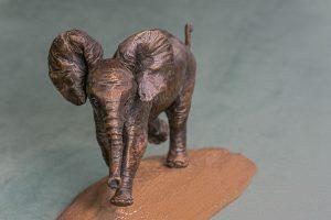 Baby Elephant Close up