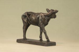 Shorthorn Calf Bronze Sculpture