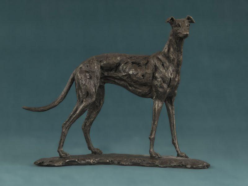Small Greyhound Dog