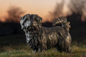 bronze norfolk terrier statue