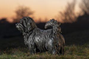 bronze norfolk terrier sculpture
