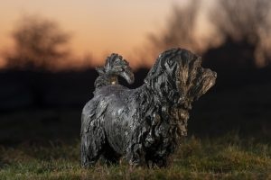 norfolk terrier sculpture