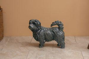 bronze norfolk terrier standing