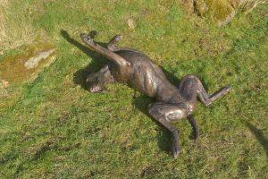vizsla lying on its back bronze sculpture