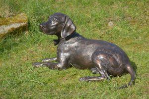 Bronze beagle spaniel cross